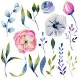 Kolekcja odosobneni akwarela anemony, inny i rośliny royalty ilustracja