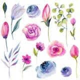 Kolekcja odosobniona akwareli menchii wiosna kwitnie i inny rośliny ilustracji