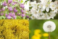 Kolekcja okwitnięcia przeciw tła pojęcia kwiatu wiosna biały żółtym potomstwom Obrazy Royalty Free