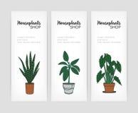 Kolekcja pionowo sztandarów szablony z roślinami r w garnkach i miejscu dla teksta na białym tle barwiony ilustracja wektor