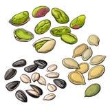 Kolekcja pistacja, słonecznik i dyniowi ziarna, royalty ilustracja