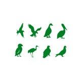 kolekcja ptak kolekcja Zdjęcie Stock