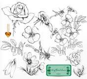 Kolekcja ręki rysować róże dla projekta royalty ilustracja