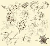 Kolekcja ręki rysować róże dla projekta ilustracja wektor