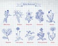 Kolekcja ręki rysujący ziele i pikantność Zdjęcia Stock