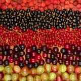 Kolekcja rozmaitość owoc rodzynki, agresty, raspberrie Obraz Stock