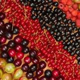 Kolekcja rozmaitość owoc rodzynki, agresty, raspberrie Fotografia Royalty Free