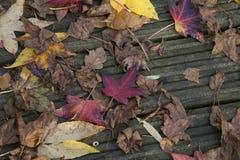 Kolekcja rozrzuceni jesień liście Obrazy Royalty Free