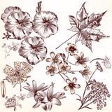 Kolekcja rysująca wektorowa ręka kwitnie dla projekta Zdjęcia Stock