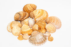 Kolekcja seashells Fotografia Stock