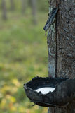 Kolekcja stukać lateks od drzew Obraz Royalty Free