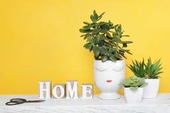 Kolekcja sukulent rośliny w białych ceramicznych garnkach fotografia stock