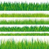 Kolekcja traw tekstury Fotografia Royalty Free