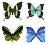 Kolekcja tropikalni motyle Zdjęcia Stock