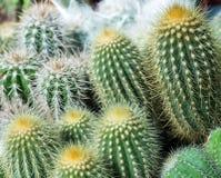 kolekcja w małych flowerpots, Kaktusowy odgórny widok obraz stock