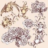 Kolekcja wektorowa ręka rysujący kwiaty Zdjęcia Royalty Free