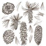 Kolekcja wektorowe jedlinowego drzewa kukurudze dla boże narodzenie projekta royalty ilustracja