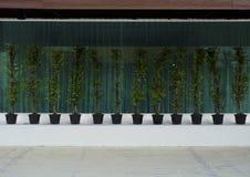Kolekcja wielki drzewo z lustrzaną tło fotografią obraz royalty free