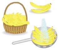 Kolekcja Wielkoduszny żniwo banany Świeże owoc w koszu i myć pod wodą bieżącą Owoc jest bardzo smakowita i royalty ilustracja
