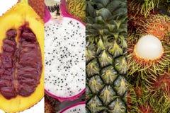 Kolekcja z różnymi owoc obraz stock
