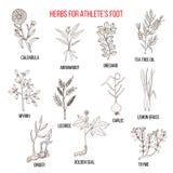 Kolekcja ziele dla atlety stopy Zdjęcie Stock