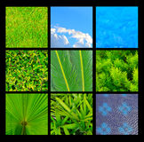 Kolekcja zielony i błękitny natury tekstury tło Zdjęcie Royalty Free