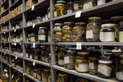 Kolekcja zoologia, węże konserwujący dla badania i edukacja, fotografia royalty free