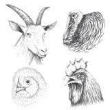 Kolekcja zwierzęta gospodarskie twarz ilustracja wektor