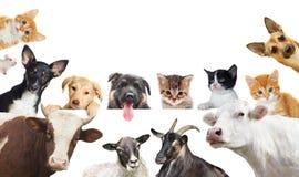 Kolekcja zwierzę domowe Zdjęcia Royalty Free