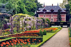 Kolekcje tulipany w Bagatelle parku, Paryż Zdjęcia Royalty Free