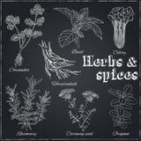 Kolendery, basil, seler, horseradish, rozmaryn, kminkowy ziarno, o royalty ilustracja