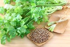 Kolendery, cilantro, z korzeniami i ziarnami obrazy stock