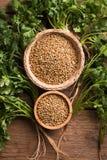 Kolendrowi ziarna i liście na drewnianym tle Fotografia Stock