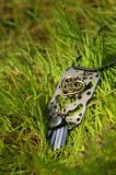 Kolia na zielonej świeżej trawie Obrazy Stock