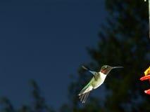 koliber lotu Zdjęcie Stock