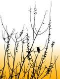koliber silhoutte Zdjęcie Stock