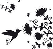 Kolibri. Vector silhouette of the branch with flowers and bird kolibri Stock Images