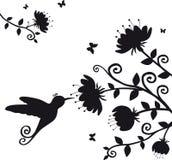 Kolibri Στοκ Εικόνες