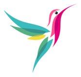 Kolibri Fotografering för Bildbyråer