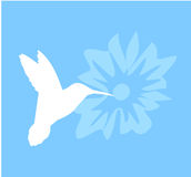 Kolibri auf Blumenschattenbild Lizenzfreie Stockfotografie