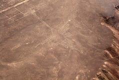 Kolibri bei Nazca Stockfotos