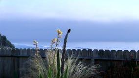 Kolibri, der auf Anlage sitzt und mit Ozean sich entfernt stock footage