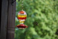 Kolibri, der nach Nektar sucht Lizenzfreie Stockbilder