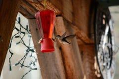 Kolibri an der Zufuhr Lizenzfreies Stockbild