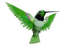 kolibri för tolkning 3D på vit Fotografering för Bildbyråer