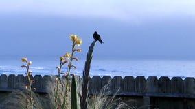 Kolibri-Landung und Sitzen auf Anlage mit Ozean-Zeitlupe stock video