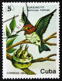 Kolibri Mellisuga-helenae, circa 1984 Lizenzfreies Stockfoto