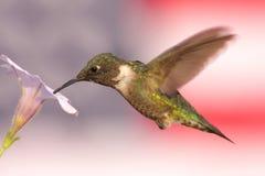 Kolibri mit Markierungsfahnen-Hintergrund Lizenzfreie Stockfotos