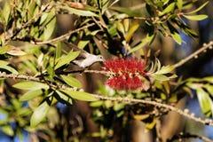 Kolibri och blommor Royaltyfri Fotografi