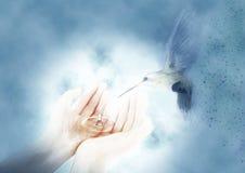 Kolibri och händer samtida målning Bakgrund Arkivfoto